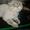Стрижка котов и собак. #56591