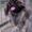 Симпатичный пекинес ( кобель ) ищет невесту ( сучку )  для вязки #792594