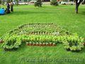 Озеленение декоративными растениями из собственного питомника