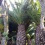 Средиземноморские растения для зимнего сада под заказ