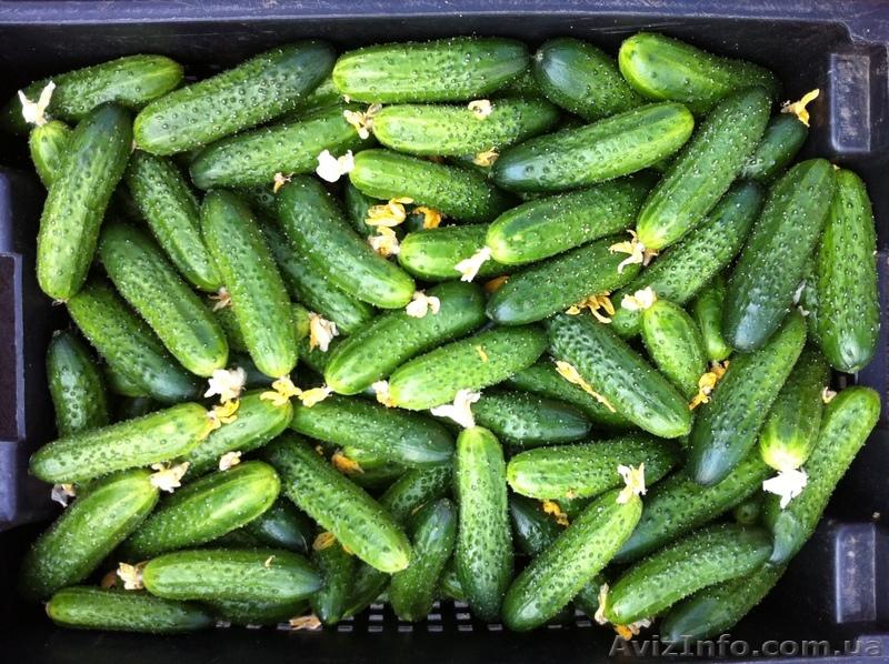 Перед новым годом свежие огурцы продавались по цене 120 за 1 кг