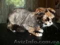 Стрижка котов и собак. - Изображение #5, Объявление #56591
