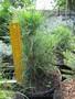 Продаем хвойные растения питомник Елки & палки