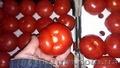 Продам помидор (томат)