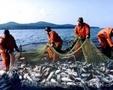 Речная рыба и море продукты
