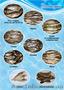 Рыба,  морепродукты,  снеки,  орехи.