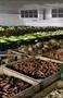 Воздухоохладители  для овощей и фруктов. - Изображение #3, Объявление #276766