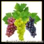 Масло из виноградных косточек, Объявление #1140790