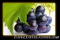 Масло из виноградных косточек - Изображение #3, Объявление #1140790