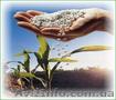 Карбамид, селитра (минудобрения), NPK по Украине и на экспорт., Объявление #1246193