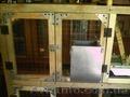 Маточники для кроликов закрытые под заказ - Изображение #4, Объявление #1273011