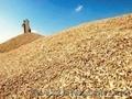 Куплю пшеницу. ячмень,  кукурузу,  сою