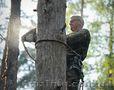 Уборка деревьев с участка
