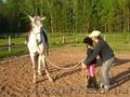 Покататься на лошадях, Объявление #1445689