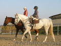 Покататься на лошадях - Изображение #2, Объявление #1445689