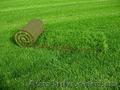Газон рулонный зеленый, Объявление #1483503
