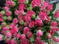 Заказать букет роз-бесплатная доставка,  лучшие цены