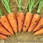 Продам овощи(капуста, морковь, свекла)