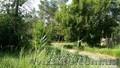Земельный участок в сосновом лесу на берегу реки Самара. - Изображение #2, Объявление #1570992