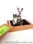 Натуральный кошачий и собачий лоток-туалет «ПИС ПИС». - Изображение #5, Объявление #1576672