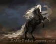 Картина по номерам Чудный конь