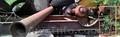 Продаем колесный прицеп-платформу ЧМЗАП-5212А, 60 тонн, 1988 г.в.  - Изображение #2, Объявление #1585154