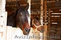 Работник конюшни (Польша)